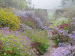 Thanks to mass planting of asters we get the impression of the autumnal garden dissolving in the lilac haze.